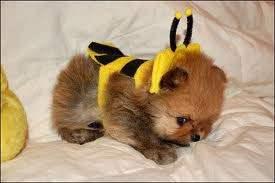 fashion_halloween-costume-puppy