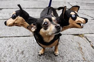 funny-dog-halloween-costume
