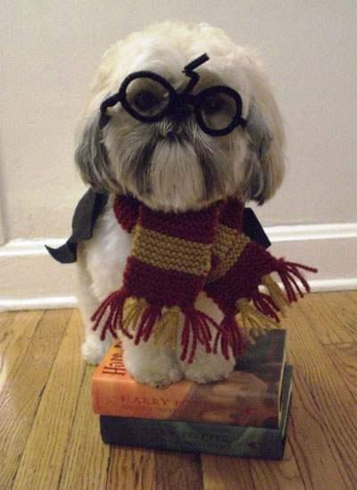 Halloween-Puppy-Costumes-1